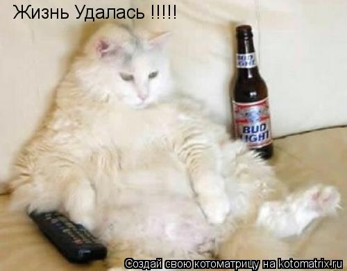 Котоматрица: Жизнь Удалась !!!!!