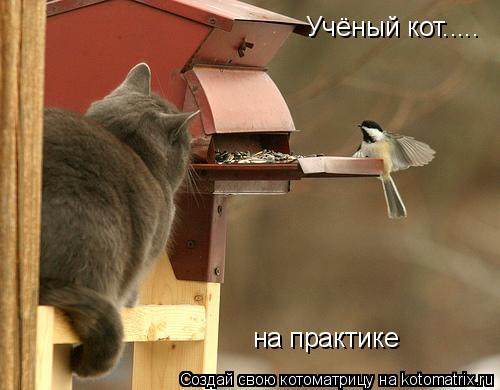 Котоматрица: Учёный кот..... на практике