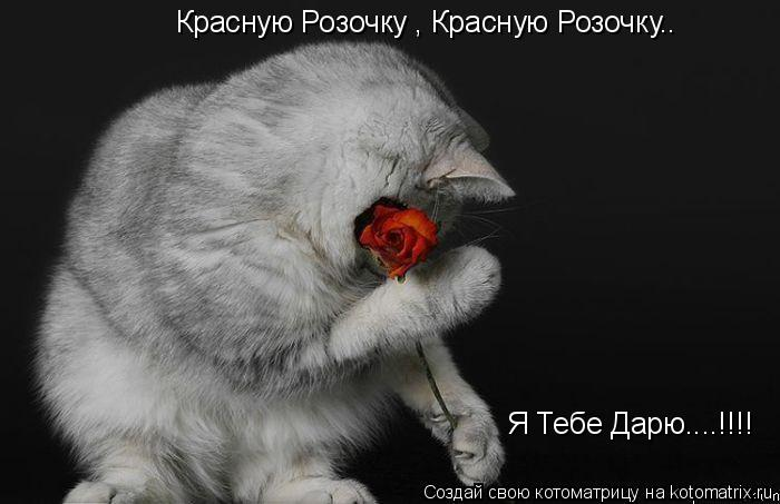 Котоматрица: Красную Розочку , Красную Розочку.. Я Тебе Дарю....!!!!