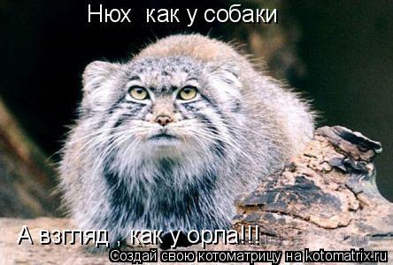 Котоматрица: Нюх  как у собаки А взгляд , как у орла!!!