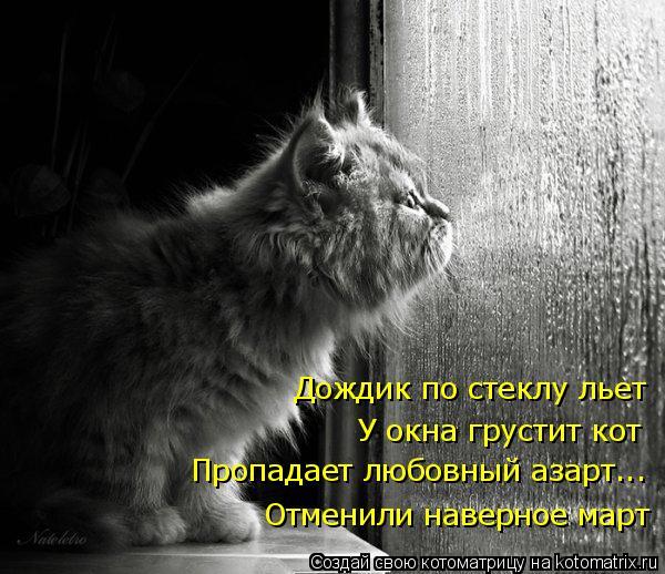 Котоматрица: Дождик по стеклу льет Отменили наверное март У окна грустит кот Пропадает любовный азарт...