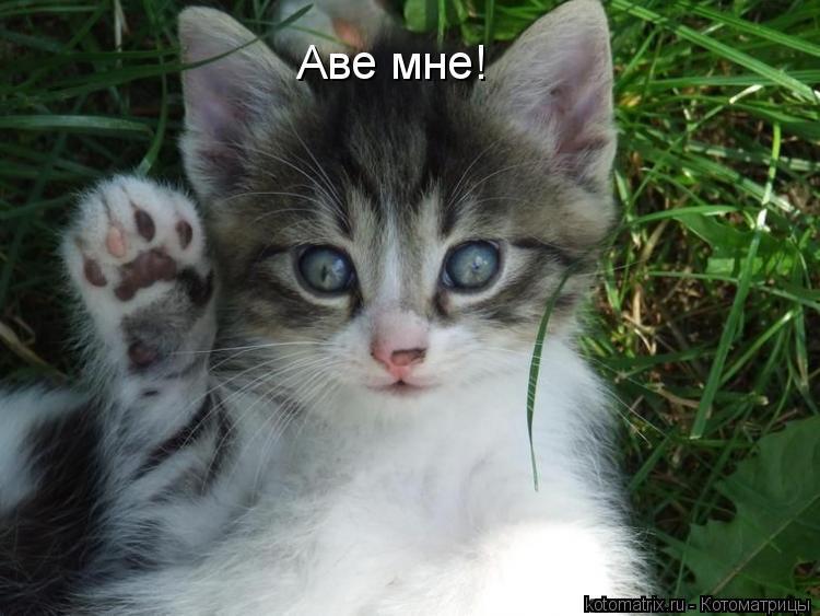 Котоматрица: Аве мне!