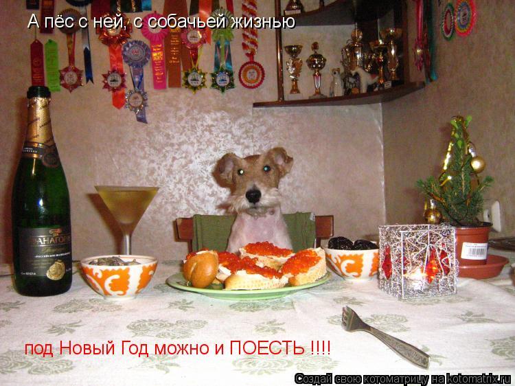 Котоматрица: А пёс с ней, с собачьей жизнью под Новый Год можно и ПОЕСТЬ !!!!