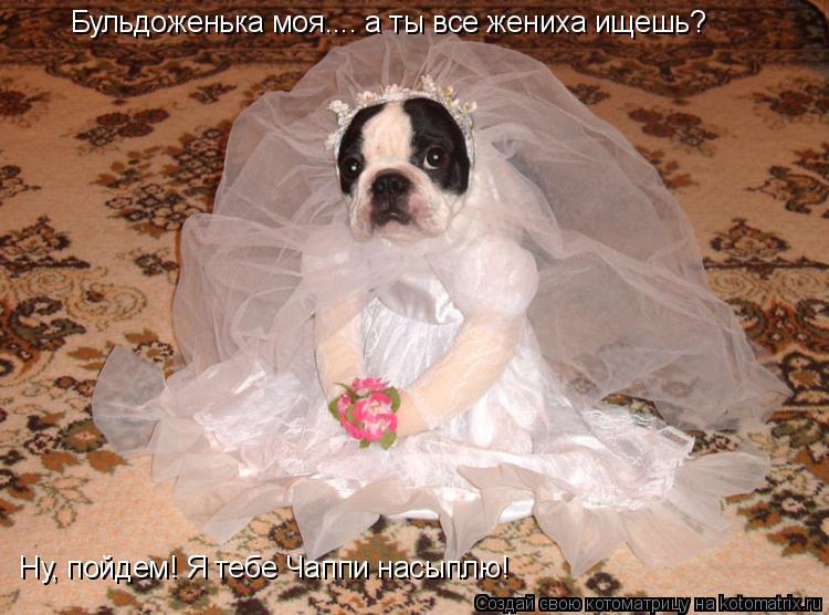 Котоматрица: Бульдоженька моя.... а ты все жениха ищешь?  Ну, пойдем! Я тебе Чаппи насыплю!
