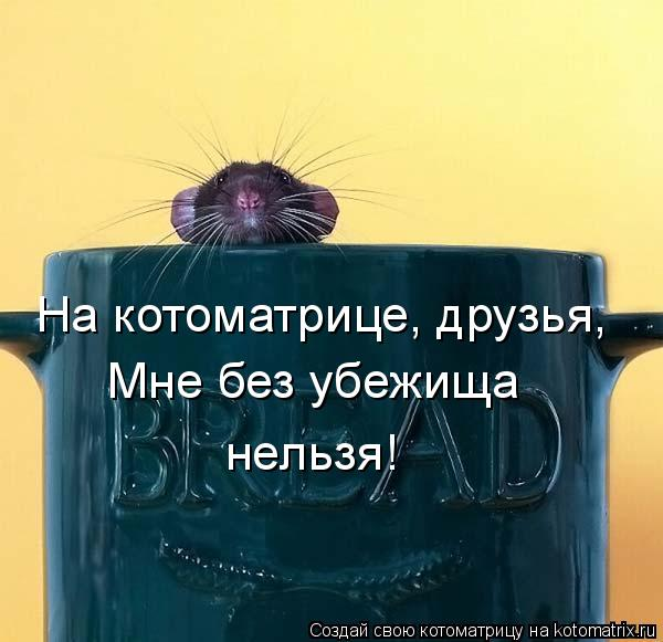 Котоматрица: На котоматрице, друзья, Мне без убежища нельзя!
