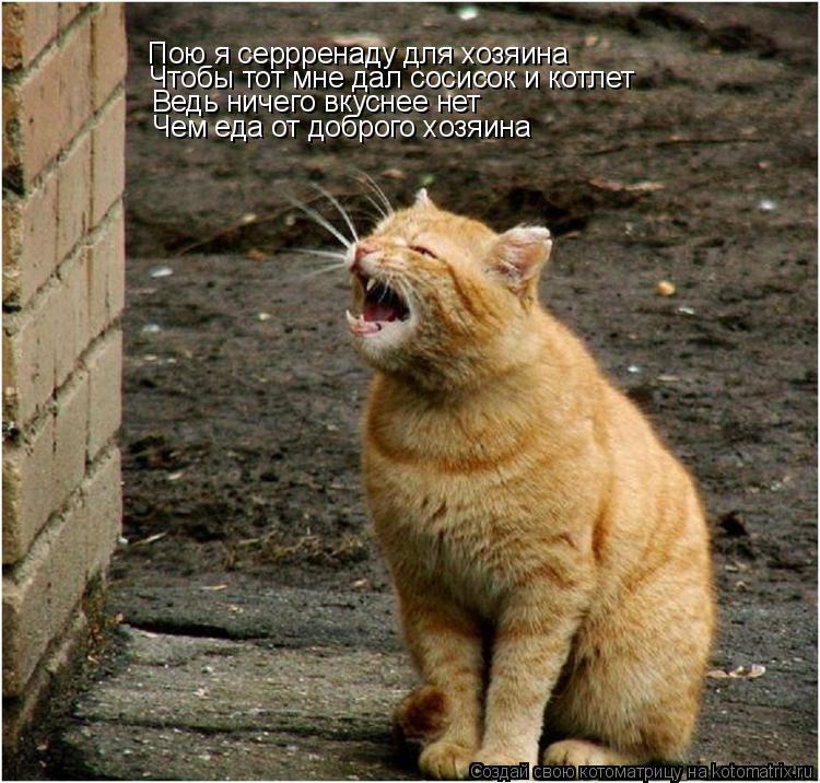 Котоматрица: Пою я серрренаду для хозяина Чтобы тот мне дал сосисок и котлет Ведь ничего вкуснее нет Чем еда от доброго хозяина