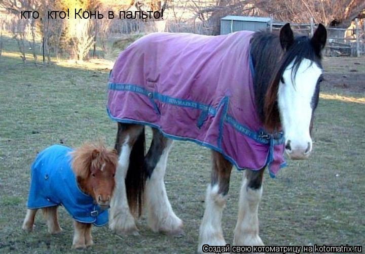 Котоматрица: кто, кто! Конь в пальто!
