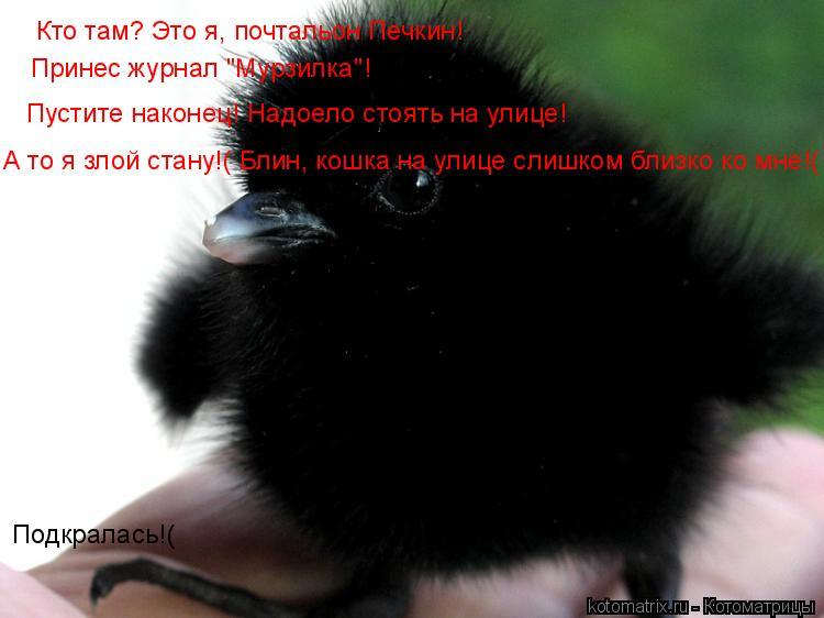 """Котоматрица: Кто там? Это я, почтальон Печкин! Принес журнал """"Мурзилка""""! Пустите наконец! Надоело стоять на улице! А то я злой стану!( Блин, кошка на улице сл"""