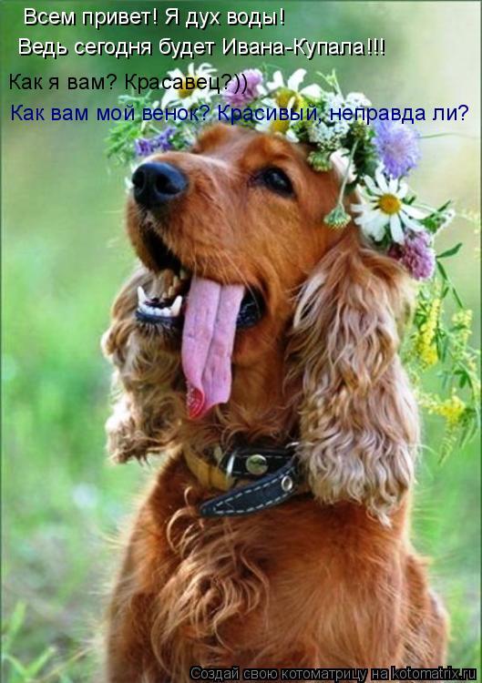 Котоматрица: Всем привет! Я дух воды! Ведь сегодня будет Ивана-Купала!!! Как я вам? Красавец?)) Как вам мой венок? Красивый, неправда ли?