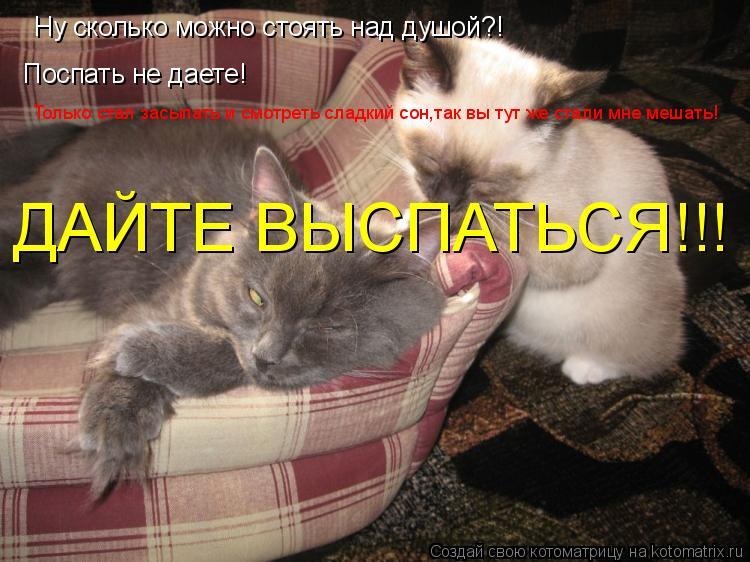 Котоматрица: Ну сколько можно стоять над душой?! Поспать не даете! Только стал засыпать и смотреть сладкий сон,так вы тут же стали мне мешать! ДАЙТЕ ВЫСПА
