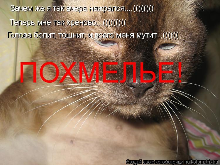 Котоматрица: Зачем же я так вчера нажрался....(((((((( Теперь мне так хреново...((((((((( Голова болит, тошнит, и всего меня мутит...(((((( ПОХМЕЛЬЕ!
