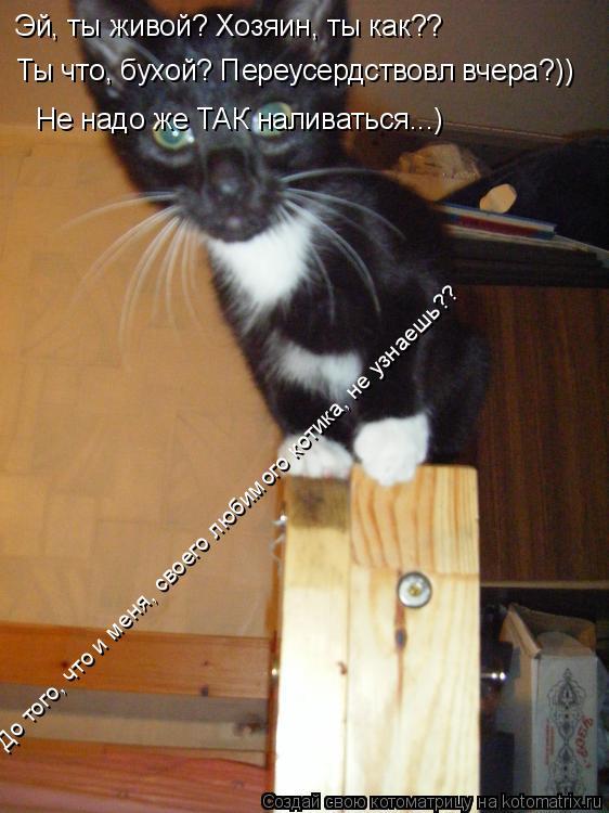 Котоматрица: Эй, ты живой? Хозяин, ты как?? Ты что, бухой? Переусердствовл вчера?)) Не надо же ТАК наливаться...) До того, что и меня, своего любимого котика, не