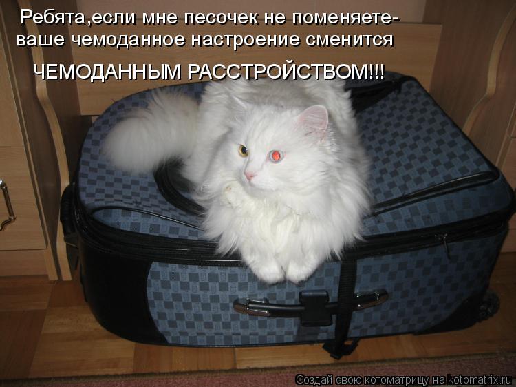 Котоматрица: Ребята,если мне песочек не поменяете- ваше чемоданное настроение сменится ЧЕМОДАННЫМ РАССТРОЙСТВОМ!!!