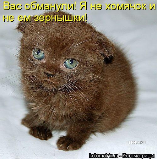 http://kotomatrix.ru/images/lolz/2010/02/22/495394.jpg