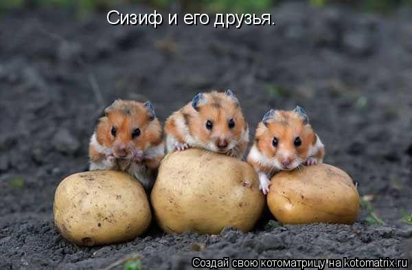Котоматрица: Сизиф и его друзья.