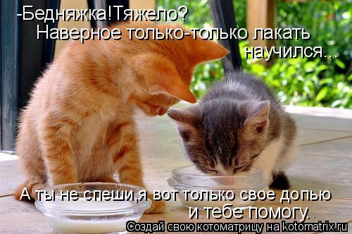 Котоматрица: А ты не спеши,я вот только свое допью  -Бедняжка!Тяжело? Наверное только-только лакать  научился... и тебе помогу.