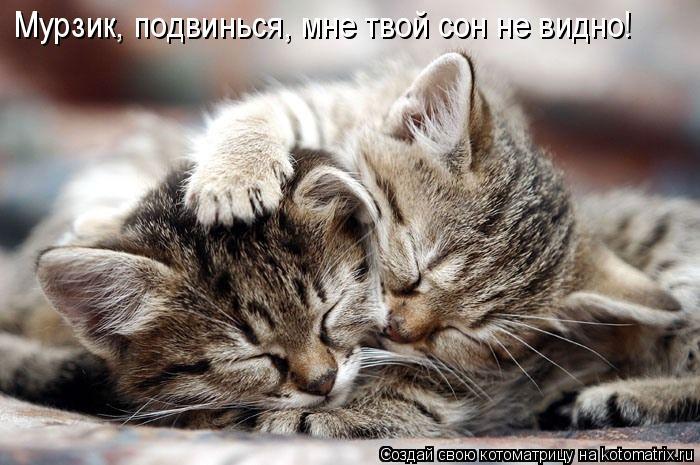 Котоматрица: Мурзик, подвинься, мне твой сон не видно!