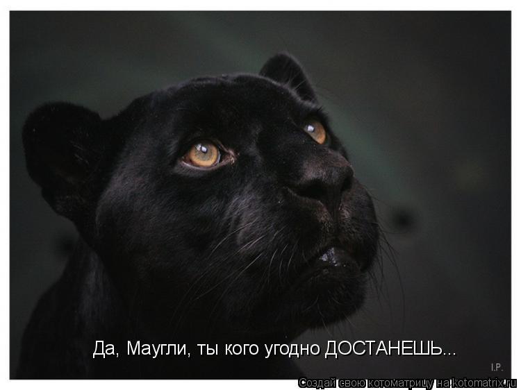 Котоматрица: Да, Маугли, ты кого угодно ДОСТАНЕШЬ...