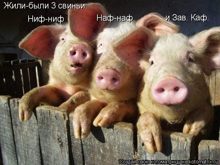 Котоматрица: Жили-были 3 свиньи: Ниф-ниф Наф-наф и Зав. Каф.