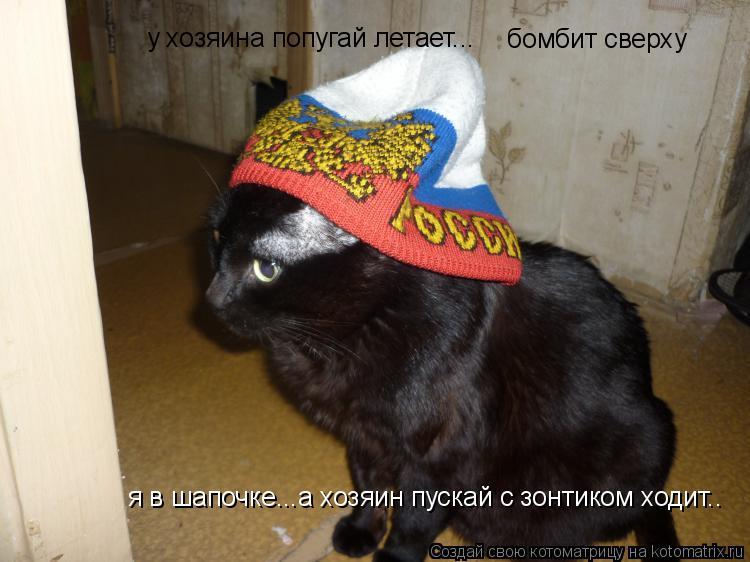 Котоматрица: бомбит сверху у хозяина попугай летает... я в шапочке...а хозяин пускай с зонтиком ходит..