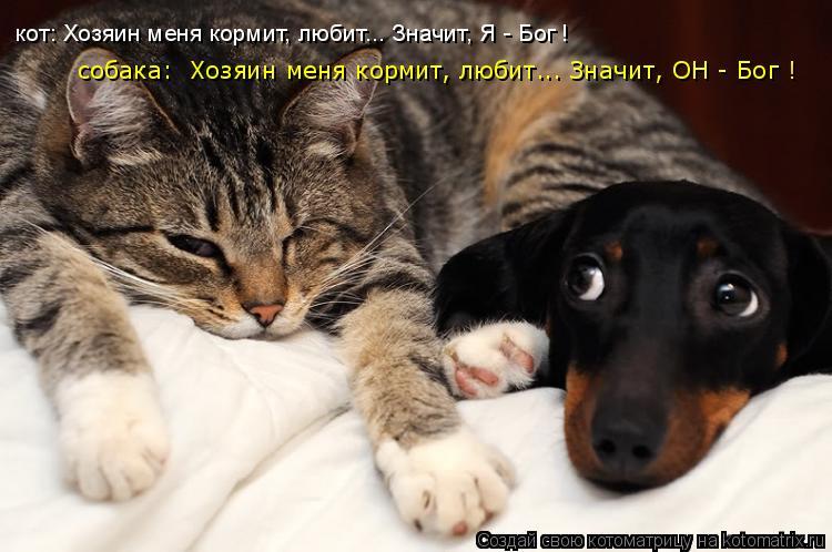 Собака кормит кота