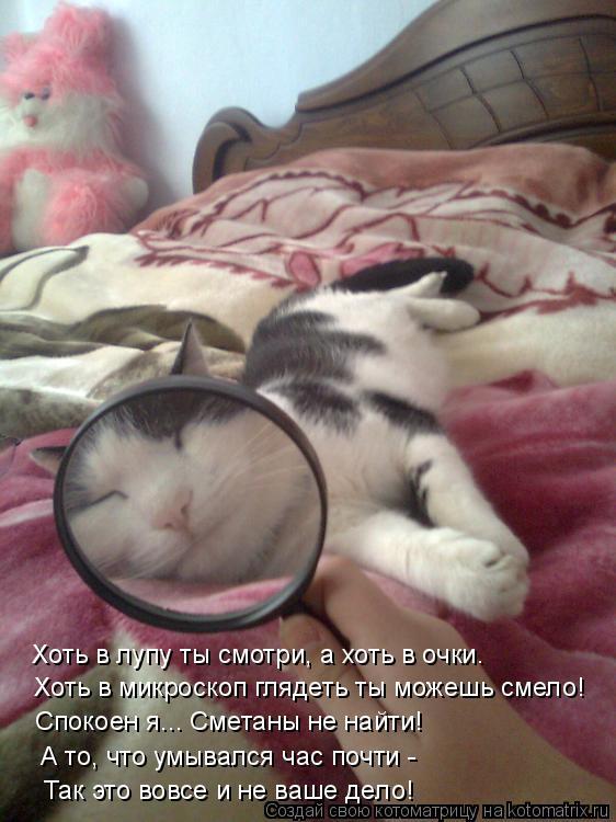 Котоматрица: Хоть в микроскоп глядеть ты можешь смело! Спокоен я... Сметаны не найти! Хоть в лупу ты смотри, а хоть в очки. А то, что умывался час почти - Так