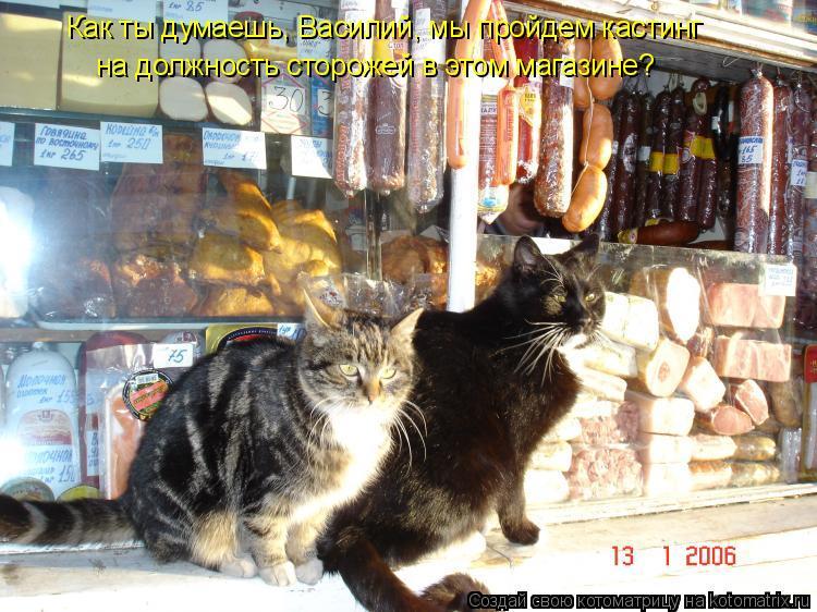Котоматрица: Как ты думаешь, Василий, мы пройдем кастинг  на должность сторожей в этом магазине?