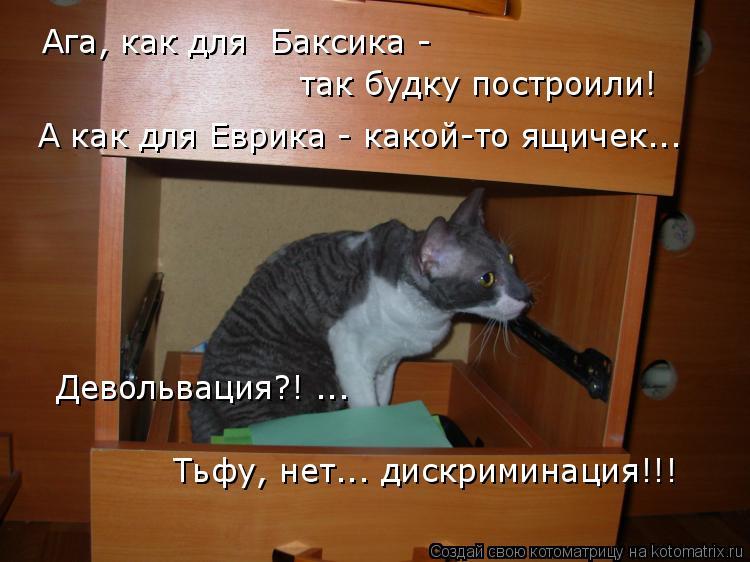 Котоматрица: Ага, как для  Баксика - так будку построили! А как для Еврика - какой-то ящичек... Девольвация?! ...  Тьфу, нет... дискриминация!!!