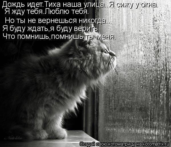 Котоматрица: Я буду ждать,я буду верить Но ты не вернешься никогда... Дождь идет.Тиха наша улица..Я сижу у окна. Я жду тебя.Люблю тебя. Что помнишь,помнишь т