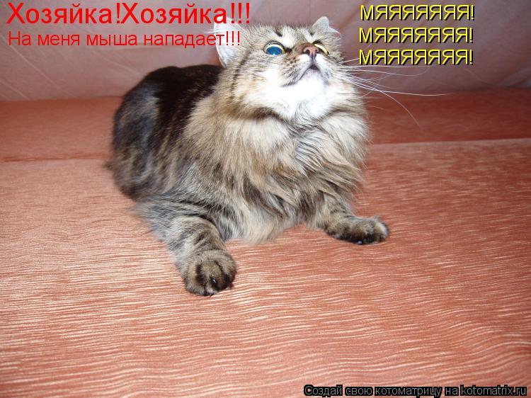 Котоматрица: Хозяйка!Хозяйка!!! На меня мыша нападает!!! МЯЯЯЯЯЯЯ! МЯЯЯЯЯЯЯ! МЯЯЯЯЯЯЯ!