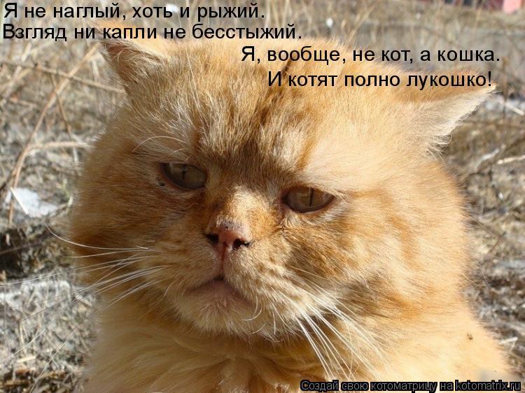 Котоматрица: Я не наглый, хоть и рыжий. Взгляд ни капли не бесстыжий. Я, вообще, не кот, а кошка. И котят полно лукошко!