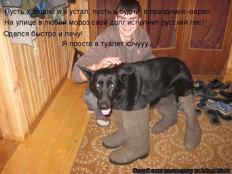 Котоматрица: Пусть холодно и я устал, пусть в будни, в праздники -аврал, На улице в любой мороз свой долг исполнит русский пес! Оделся быстро и лечу! Я прос