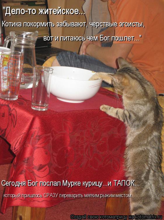 """Котоматрица: """"Дело-то житейское...  вот и питаюсь чем Бог пошлет..."""" Котика покормить забывают, черствые эгоисты,  Сегодня Бог послал Мурке курицу...и ТАПОК..."""