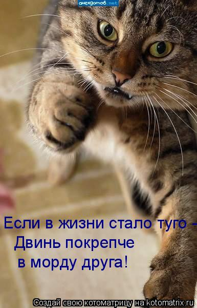Котоматрица: Если в жизни стало туго -  Двинь покрепче в морду друга!