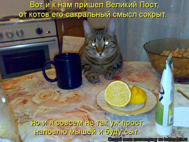 Котоматрица: Вот и к нам пришел Великий Пост, от котов его сакральный смысл сокрыт. но и я совсем не так уж прост, наловлю мышей и буду сыт.