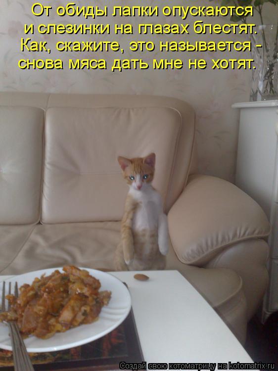 Котоматрица: От обиды лапки опускаются и слезинки на глазах блестят. Как, скажите, это называется - снова мяса дать мне не хотят.