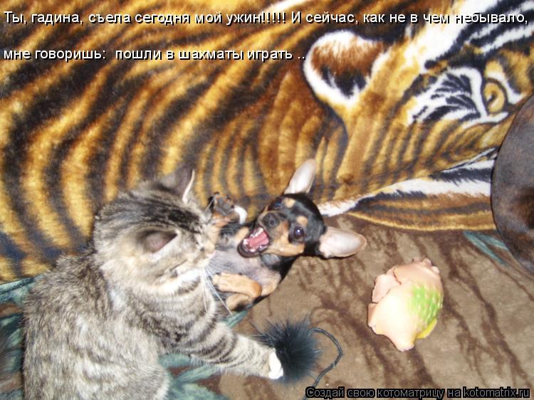 Котоматрица: Ты, гадина, съела сегодня мой ужин!!!!! И сейчас, как не в чем небывало,  мне говоришь: «пошли в шахматы играть»….