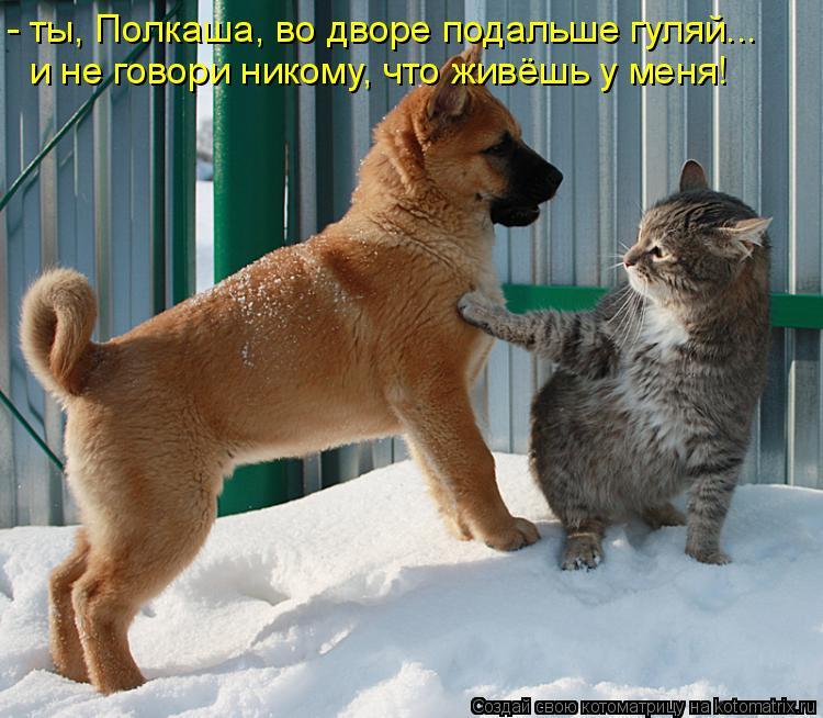 Котоматрица: - ты, Полкаша, во дворе подальше гуляй... и не говори никому, что живёшь у меня!