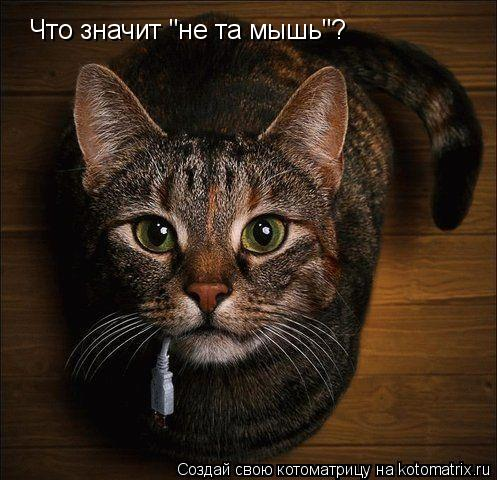 "Котоматрица: Что значит ""не та мышь""?"