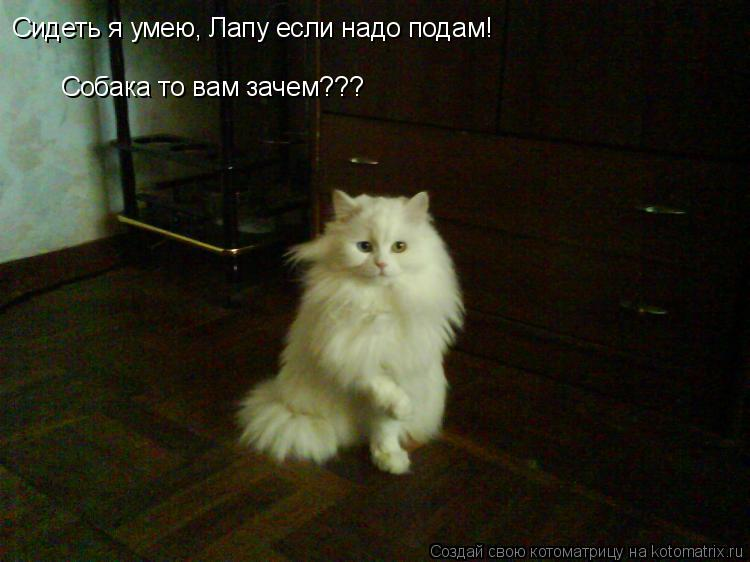 Котоматрица: Сидеть я умею, Лапу если надо подам! Собака то вам зачем???