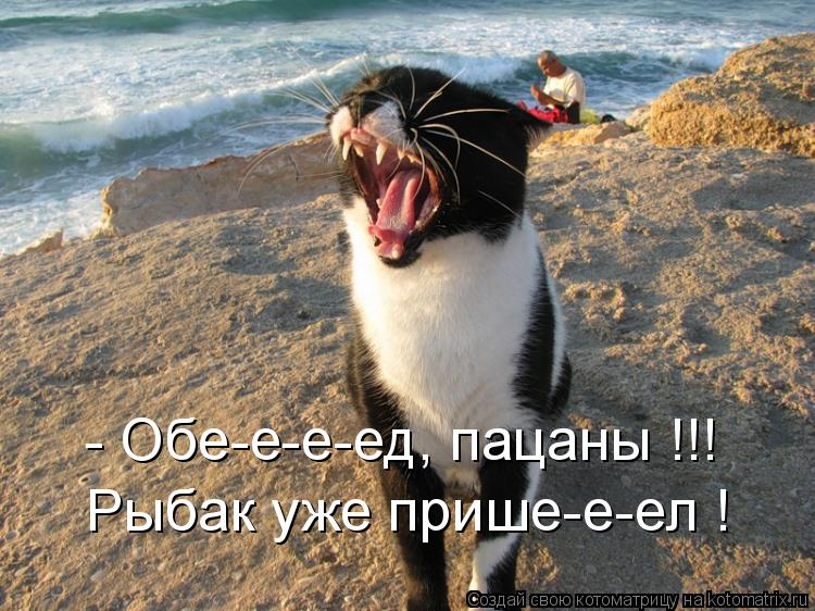 Котоматрица: - Обе-е-е-ед, пацаны !!! Рыбак уже прише-е-ел !