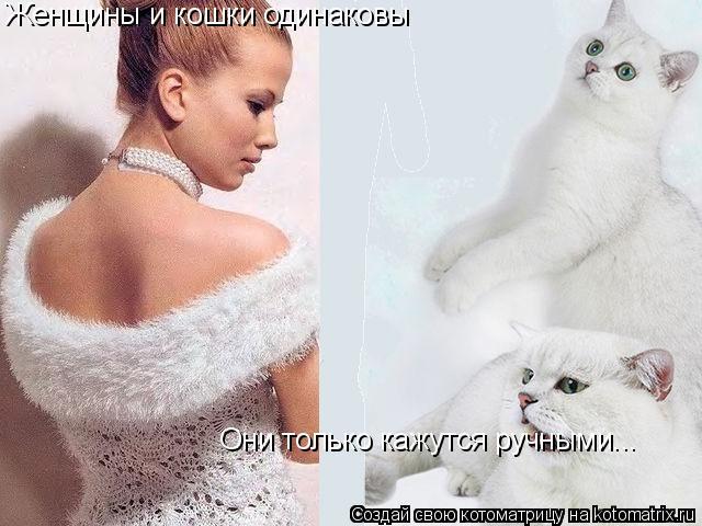 Котоматрица: Женщины и кошки одинаковы Они только кажутся ручными...