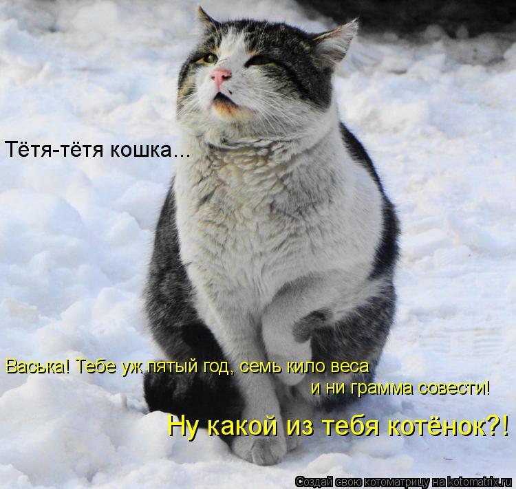 Котоматрица: Васька! Тебе уж пятый год, семь кило веса  и ни грамма совести! Ну какой из тебя котёнок?! Тётя-тётя кошка...