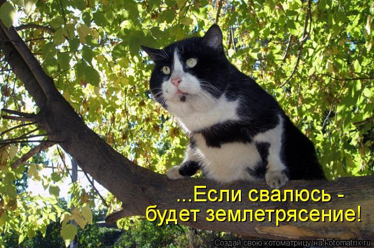 Котоматрица: ...Если свалюсь -  будет землетрясение!
