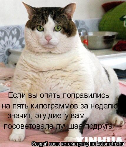 Котоматрица: Если вы опять поправились  на пять килограммов за неделю, значит, эту диету вам  посоветовала лучшая подруга