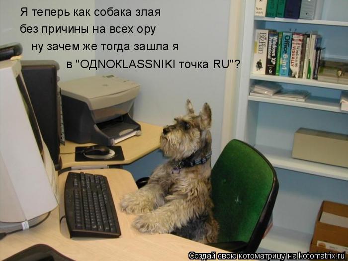 """Котоматрица: Я теперь как собака злая без причины на всех ору ну зачем же тогда зашла я в """"OДNOКLASSNIKI точка RU""""?"""