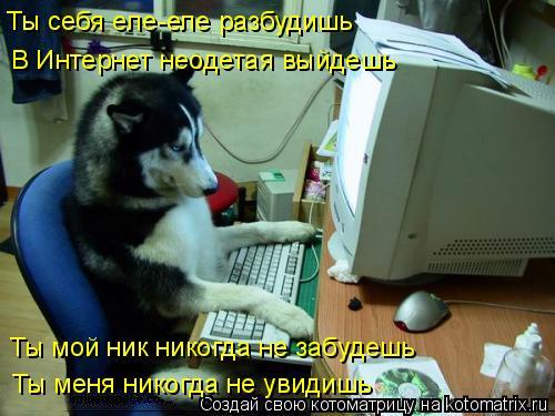 Котоматрица: Ты себя еле-еле разбудишь В Интернет неодетая выйдешь Ты мой ник никогда не забудешь Ты меня никогда не увидишь