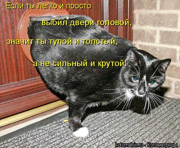 Котоматрица: Если ты легко и просто выбил двери головой, значит ты тупой и толстый, а не сильный и крутой!