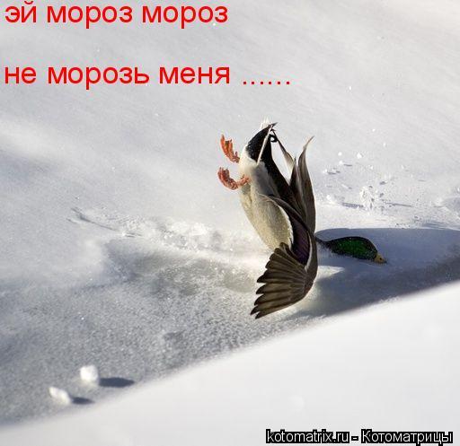 Котоматрица: эй мороз мороз не морозь меня ......