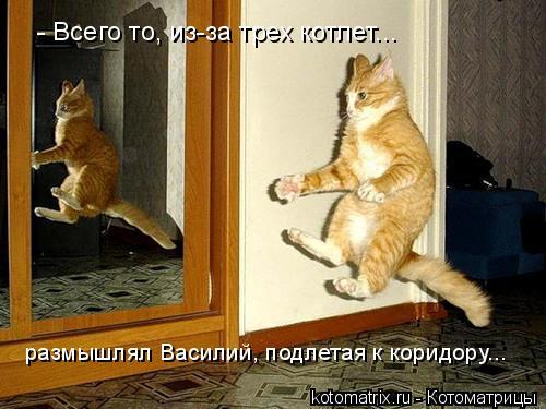 Котоматрица: - Всего то, из-за трех котлет... размышлял Василий, подлетая к коридору...